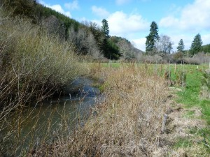 Shotpouch-Riparian-Bank Pull-Back-2014_0317