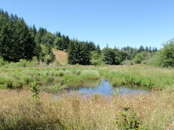 Beaver Pond on upper Beaver Cr - 2009