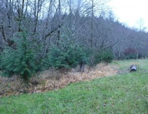 Woods Riparian Baker Cedars 121514