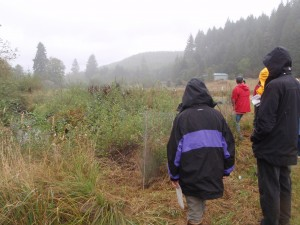 Shotpouch riparian planting, fall 2013.