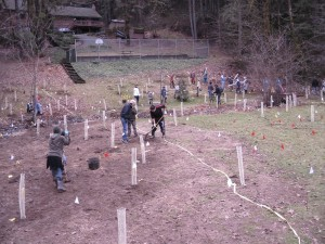 Students planting trees on field.